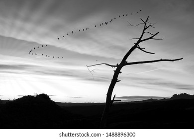 Creative landscapes with birds flying, tribute to Ansel Adams, walking in the forest, walking in the park, Series of black and white artistic photography of mountain landscapes and fog with sun rays,