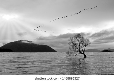 Creative landscapes with birds flying, tribute to Ansel Adams, walking in the forest, walking in the park, Series of black and white artistic photography of mountain landscapes and a lake