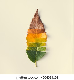 Creative layout of colorful autumn leaves. Flat lay. Season concept. - Shutterstock ID 504323134