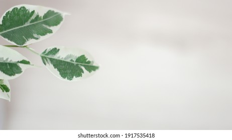 Creative layout of colorful tropical leaves on a white background. Minimal summer exotic concept with copy space. The green leaves are located on the left - Shutterstock ID 1917535418