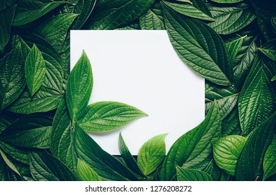 Creative layout composition frame of juicy green leaves with beautiful texture with paper card note, macro. Flat lay. Nature concept, copy space.