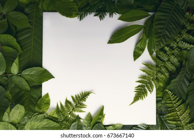 Creative layout foliage forest leaves with paper card note. top view. Nature concept