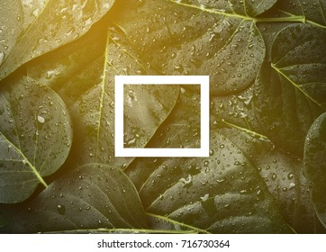 Creative layout of leaves in drops of water with a white frame. Background for your text. Flat lay. Copy space.
