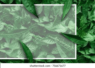 Creative layout of leaves with a paper border. Flat lay. Nature concept.
