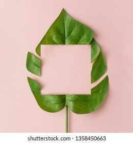 Creative layout made with cut out monstera leaf on pastel pink background. Minimal tropical nature composition with copy space.