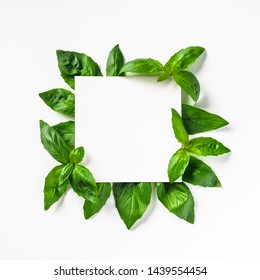 Creative layout made with green basil leaves. White paper square on heap of green basil leaves. Isolated on white. Top view or flat lay. Copy space for text.