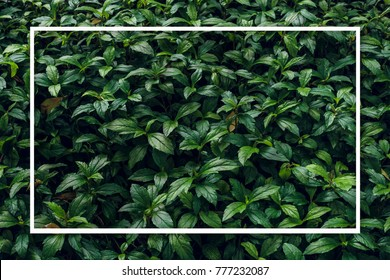 Creative layout made of green leaves. Nature background.  Flat lay.