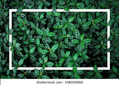 Creative layout made of green nature with a collection of mini tropical leaves, for your background or flat lay