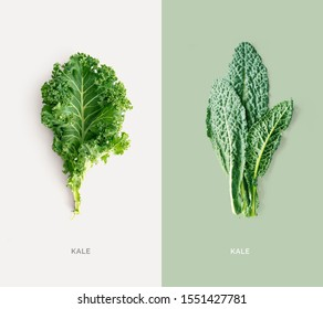 Creative layout made of kale on white background. Flat lay. Food concept. Macro concept.
