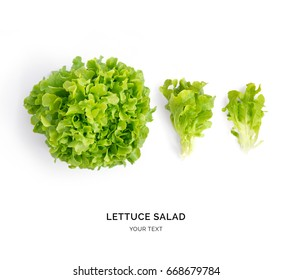 Creative layout made of lettuce salad . Flat lay. Food concept.