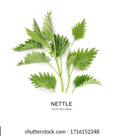 Creative layout made of nettle on the white background. Flat lay. Macro  concept.