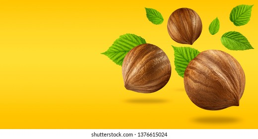 Creative layout made of nuts hazelnut and leaf on pastel blue background. Macro concept. Nuts hazelnut mockup as package design element. Full depth of field. Food concept.
