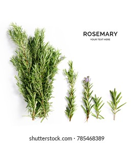 Creative layout made of rosemary . Flat lay. Food concept. Rosemary on the white background.