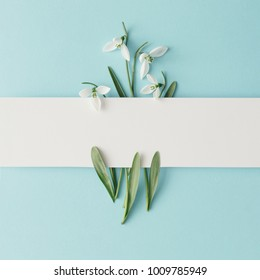Creative layout made with snowdrop flowers on bright blue  background. Flat lay. Spring minimal concept.