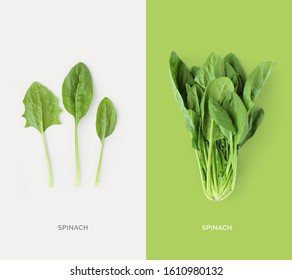 Creative layout made of spinach. Flat lay. Food concept. Macro concept.