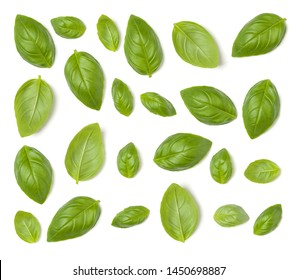 Creative layout made of Sweet Basil herb leaves isolated on white background. Flat lay, top view. Food ingredient pattern.
