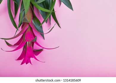 Creative layout made of tropical flowers and palm leaves on pastel pink background, top view, flat lay