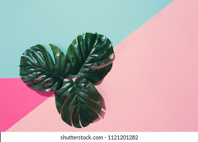 Creative layout made of tropical leaves on pastel pink and blue background. Minimal summer exotic concept with copy space.