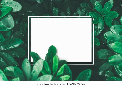 creative layout made of tropical leaves.