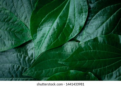 Creative layouts made from green leaves for the background.