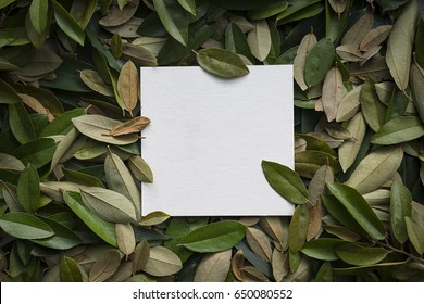 Creative leaflets with free copy space. Nature spring concept lying flat for back ground