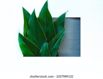 Creative minimal of green leaves. Nature concept. Flat lay.