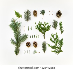 Creative natural layout of winter plants on white background. Thuja, fir tree needles, branches and cones. Botanic creative set of plants. Flat lay, top view