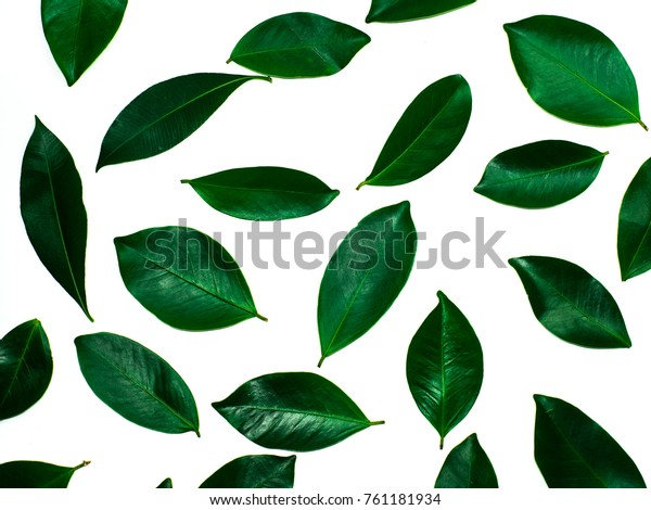 Creative Nature Layout Made Tropical Leaves Stock Photo Edit Now 761181934 Vector design for card, poster, flyer, brochure, cover and other users. shutterstock