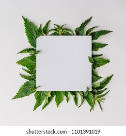 Creative nettle leaves layout with paper card note copy space. Minimal nature concept. Flat lay. Green herbs texture.