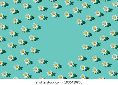 Creative pattern made of camomile flowers on colorful background. Floral layout for seasonal cards, blogs, posters and web design. Summer concept.Top view. Flat lay. Minimal style. Copy space