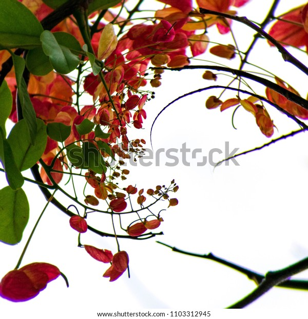 Creative shower trees design with abstract background