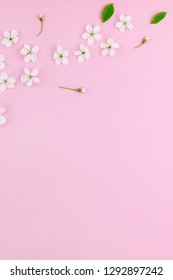 Creative top view cherry tree blooming flowers frame pattern on millennial pink background with copy space in minimal style, template for lettering, text or your design