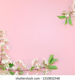 Creative top view cherry tree blooming flowers brunch frame on millennial pink background with copy space in minimal style, template for lettering, text or your design