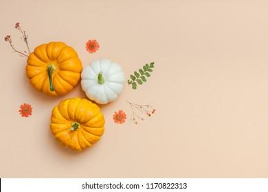 Creative Top-View-Wohnung Lay Herbst Komposition. Rahmen aus Kürbissen getrocknete Blumen hinterlässt Farbpapier-Hintergrund-Kopienraum. Vorlagenfallernte Thanksgiving-Halbjahreszeitkarten