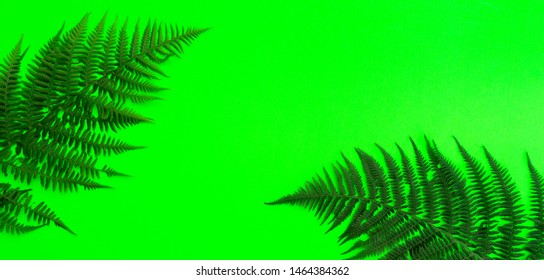 Creative tropical flat view. Tropical leaves, fern, trend background with copy space.Bold coler green