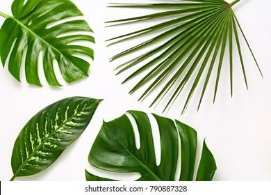 Creative Tropical Fresh Palm Leaves Set. Green Summer Design. Art Bright Layout. Nature background. Minimal. Detail