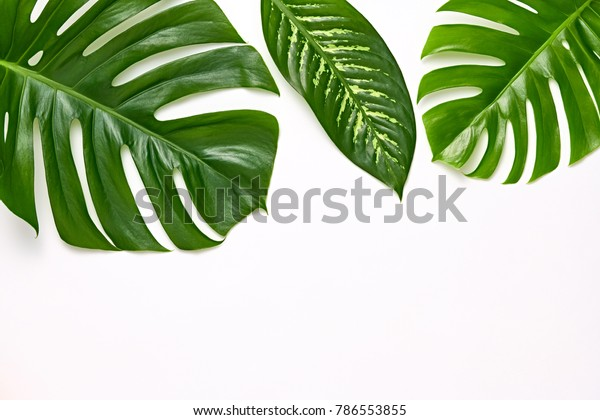 Creative Tropical Fresh Palm Leaves Set Stock Photo Edit Now 786553855 Search for more beautiful pictures and free images on picjumbo! shutterstock