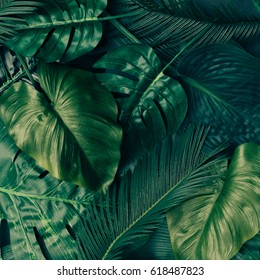 Creative tropical green leaves layout. Nature spring concept. Flat lay.