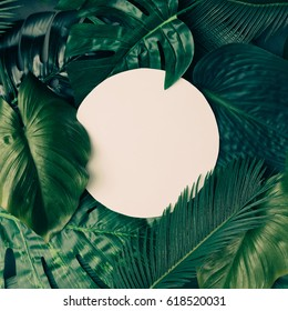 Creative tropical green leaves layout with copy space. Nature spring concept. Flat lay.
