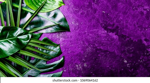 Creative tropical leaves background. Trandy tropical leaves on ultra violet slate background - color of the year 2018. Top view, copy space. Banner.