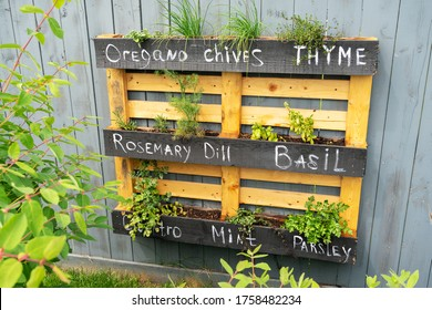 Creative wood herb planter made of wooden pallets pallet hanging on the grey fence in a backyard. Garden work. Vegetable life. Pallet painted in black as interesting idea for plants. Rosemary Basil.