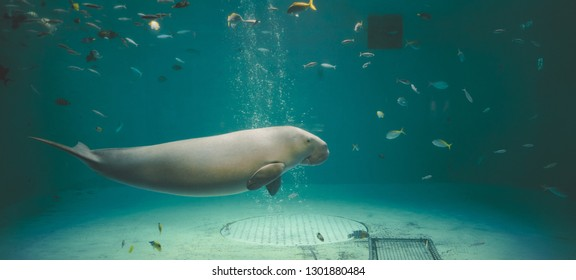 Creatures and dugongs