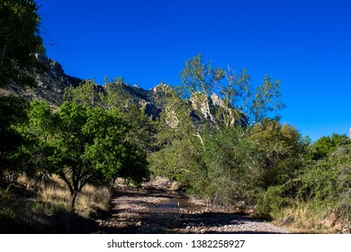 Creek in Arizona's Chiricahua Mountains in early spring