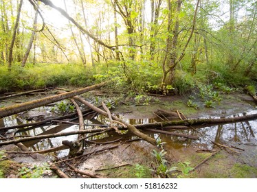 creek bed, fallen trees and swamp water