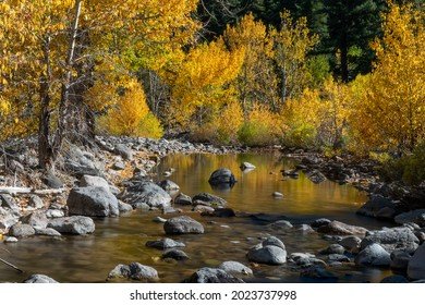 Creek in California near highway 4 in the Eastern Sierras side, down from Ebbets Pass, featuring the reflection of the yellow cottonwood leaves in the water