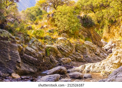 A creek coursing through a mountain with a forest. The Sun casts a beautiful gold light.