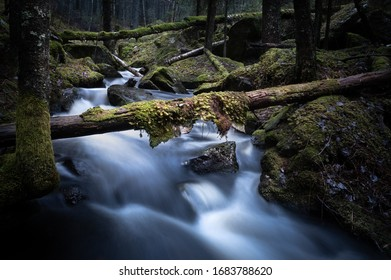 Creek flowing between moss-clad rocks in a natural forest with fallen trees.