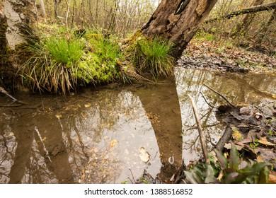 A creek flowing through a forest.  St. Mary's River State Park, Leonardtown, MD, USA.