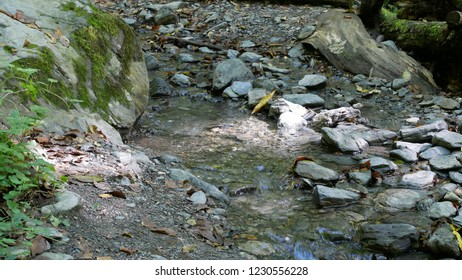 A creek in forest.