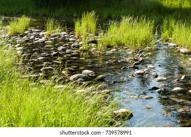 Creek at Grand Teton NP, Wyoming, USA